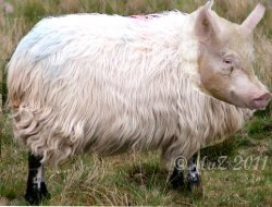 Klonfleisch von der Eier legenden Wollmilchsau