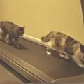 Bild: Katzen auf dem Laufband