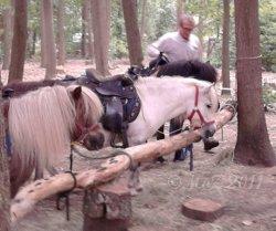 Ponys im Wildpark Alte Fasanerie