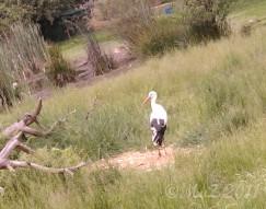 Storch im Wildpark Alte Fasanerie