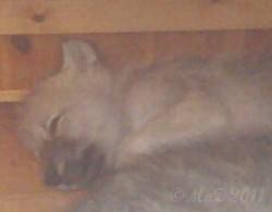 Schlafendes Wolfsbaby im Wildpark Alte Fasanerie