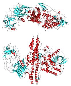 Botox/Botulinumtoxin Serotyp A (Clostridium botulinum) - Bändermodell nach PDB 3BTA