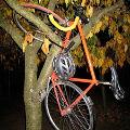 Bild: Fahrrad / Bike parken im Baum by rcoder