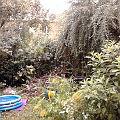 Bild: Unser Garten in Frankfurt am Main - Westhausen 02.09.2011 um 19:00 - 25°C und 85% Luftfeuchtigkeit