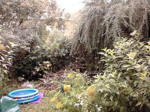Unser Garten in Frankfurt am Main - Westhausen 02.09.2011 um 19:00 - 25°C und 85% Luftfeuchtigkeit