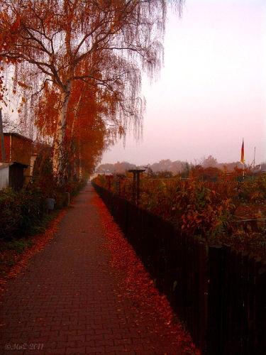 Bild: Morgenstimmung 11.11.11 in Frankfurt am Main - Westhausen