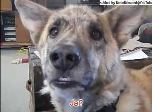 """Screenshot aus dem Video """"Ein sprechender Hund"""" - Ultimate Dog Tease mit deutschen Untertiteln"""