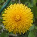 Bild: Frühling im Garten
