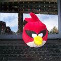 Bild: Wenn die Angry Birds dich anspringen ... solltest du eine Spielpause einlegen.