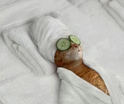 Super Fotomontagen - Katze mit Gesichtsmaske