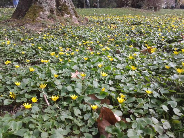 Bild: Positiv gedacht - Die Blumen sprießen jetzt endlich.