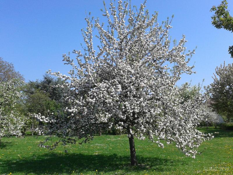 Bild: Positiv gedacht - gefreut: Der Mai sorgt mit ersten Sonnentagen für sprießende Blüten