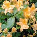Bild: Blütenbild mit Regentropfen zu Positiv gedacht trotz Regen, Regen und nochmals Regen.