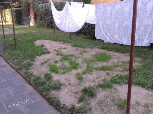 Bild: Neuer Rasen auf der Wäschewiese: eher eine Steppe