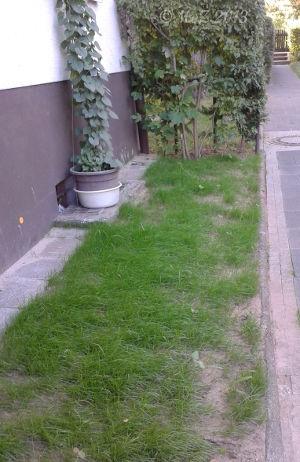 Bild: Neuer Rasen der gedeiht