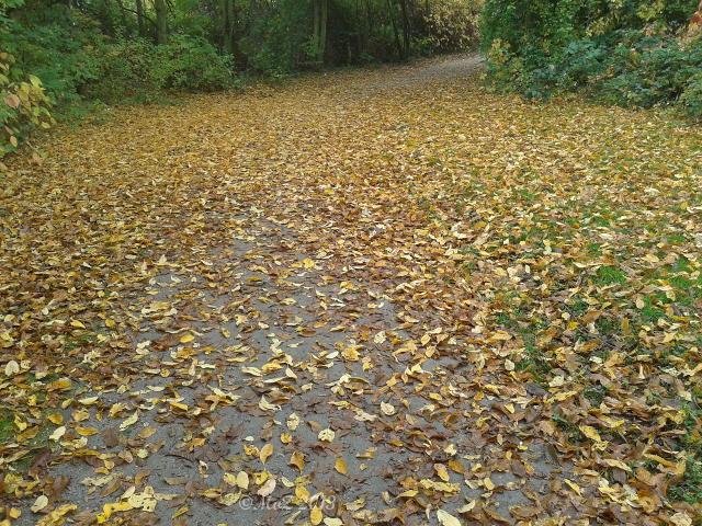 """Bild: Positiv gedacht in einem """"richtigen"""" Herbst."""