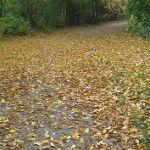 Bild: Positiv gedacht in einem richtigen Herbst