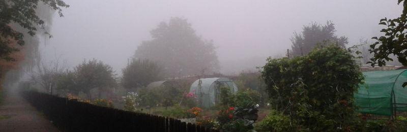Wenn der Herbst Einzug hält ... die morgendlichen Nebel...