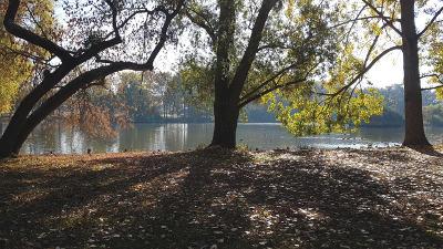 Bild: Frankfurts Ostend: Der Ostpark