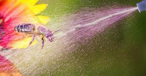 Bild: Kein Rechtsbruch für Bienengift